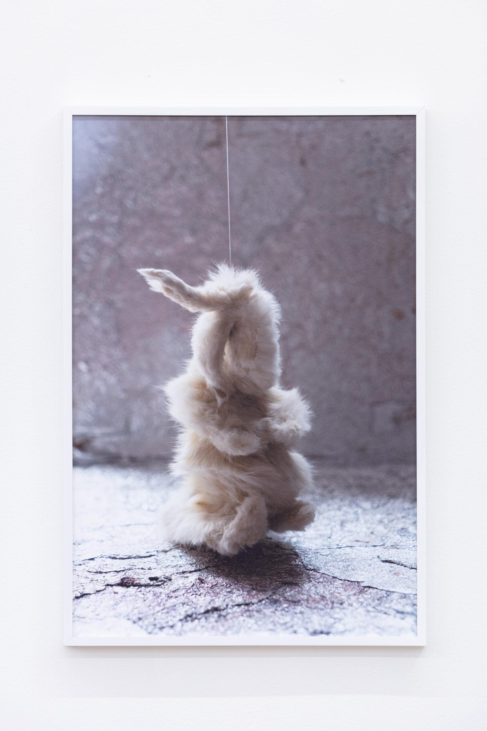 Anna Betbeze, Forms Like Dreams, Bunny